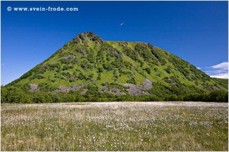 Myr, fjell og måke - Bø på Andøya (juni 2008). Klikk på bildet for større versjon.